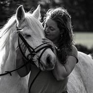 Briarwood Horses
