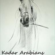 Kadar Arabians