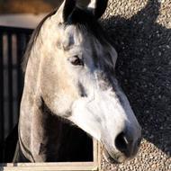 .:TEAM JUMPING HORSES:.