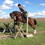 Hestetossen uden hest