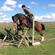 Hestetossen nu med hest igen