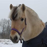 Hestetræning - tilbagetilhesten