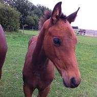Maja & Ponyerne! ;)