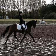 Pony rytteren<3