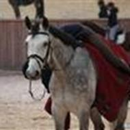 Josse (Ny hest )