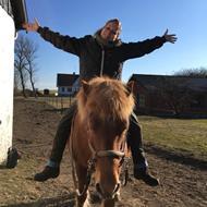 Holistiske hest