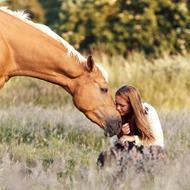 Heste frihed DK