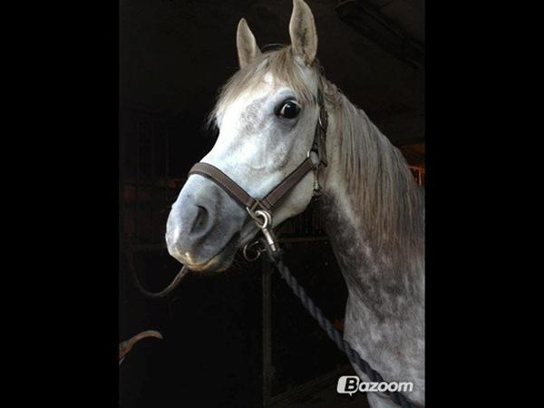 Ny VIP-feature på HesteGalleri - Billeder i forum