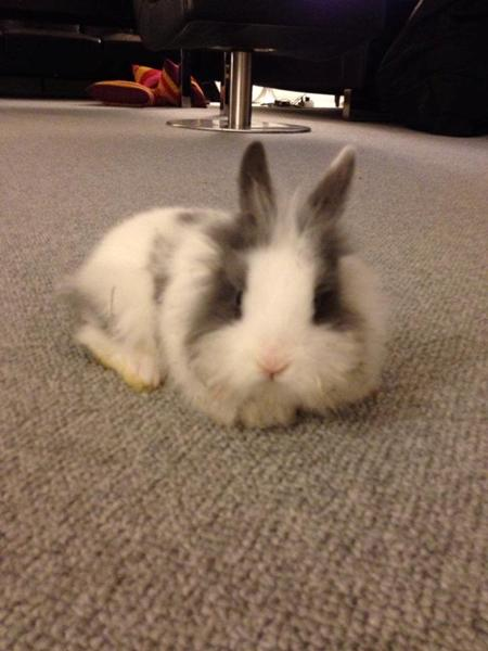 Kanin navn