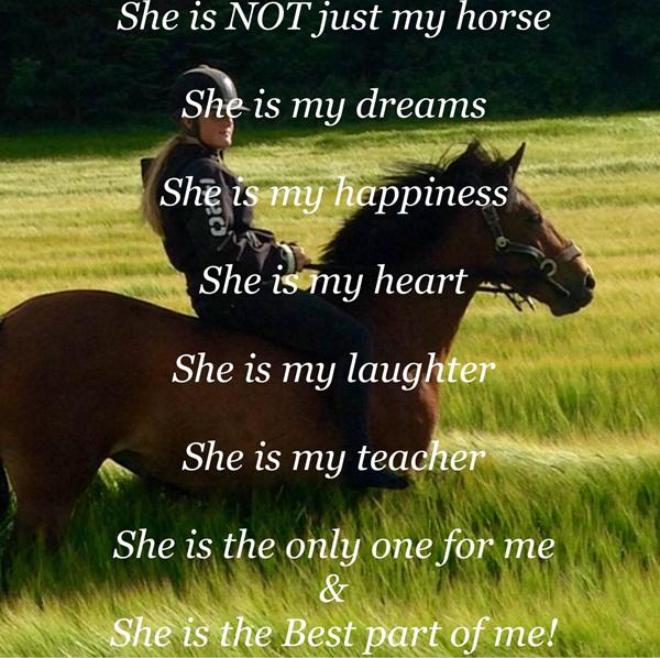 citater om heste Heste Citater   Skrevet af Tilde F citater om heste
