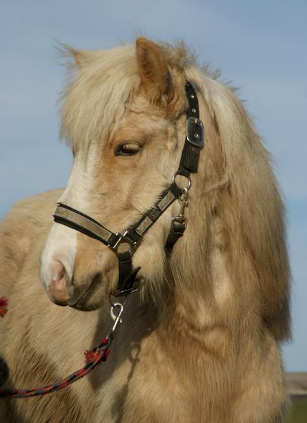 Loppemarkeder med udstyr til heste
