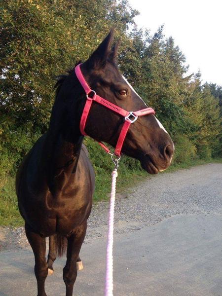 Bid til følsom hest