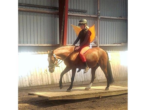 Er jeg for stor til min pony ?