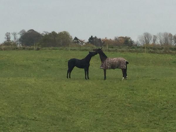 Hils på min nye hest - Freiherr af Hvarre