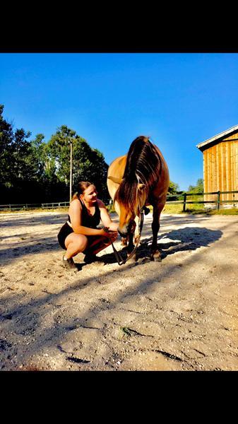 Søger opstaldning (ikke til den hest på billedet)