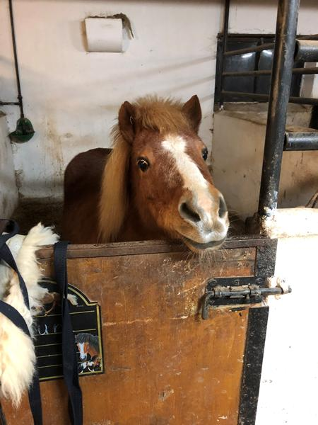 Min næste hest skal ikke være nuttet