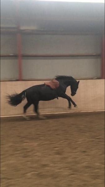 Hest smider sko :(