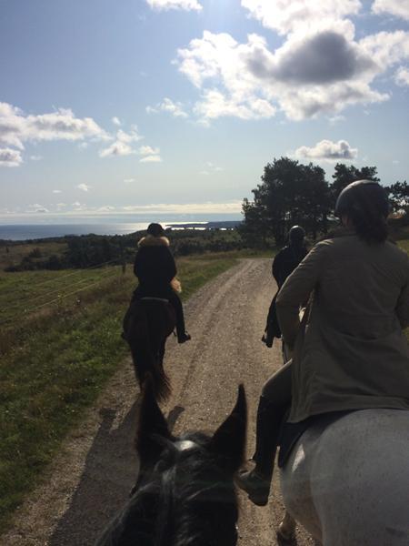Mindfulness ridetur i Mols bjerge i dag