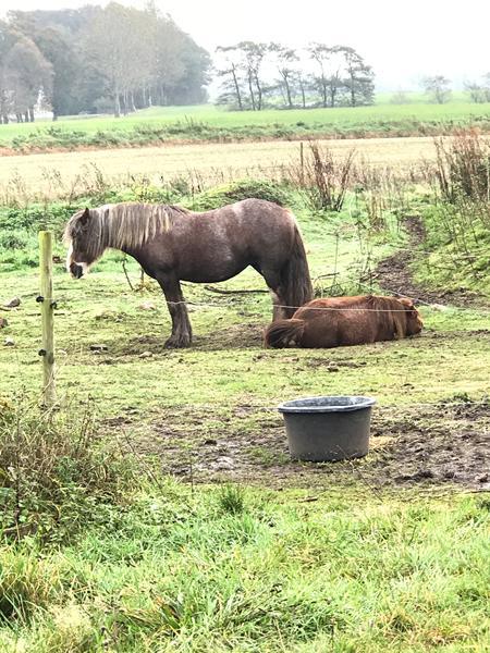 Hvis du kunne - gravsted til heste