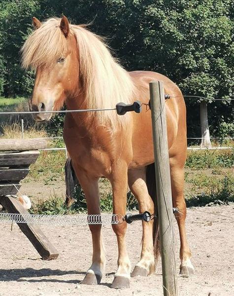 Tjekke blup på hest