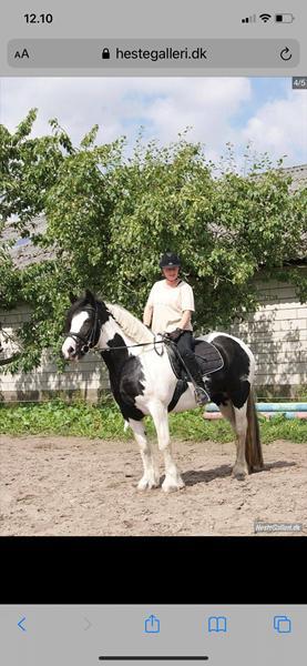 HJÆLP- jeg søger en person der har haft min hest