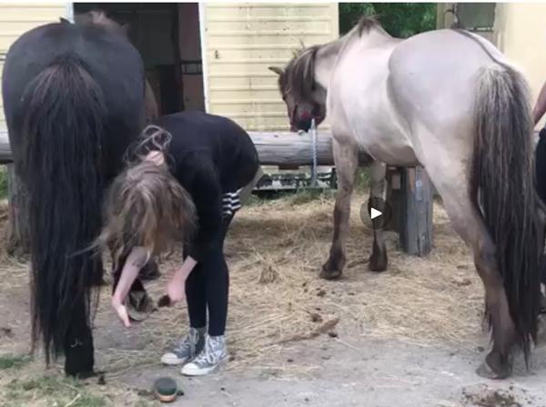 Er disse heste velplejede?