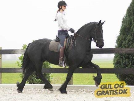 Meget billig hest - til salg for 2 (eller er det flere gange)gang ??? - Skrevet af Lisbeth R