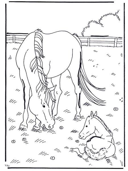 Heste Maleb 248 Ger Skrevet Af Karen D