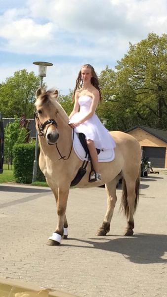 heste pige