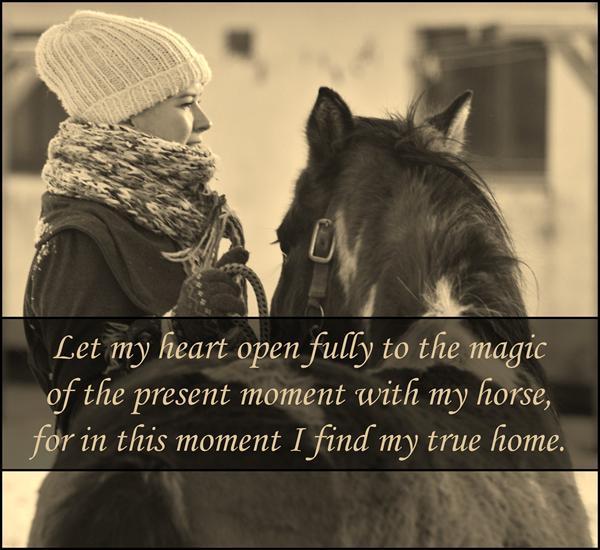 citater om heste ordsprog om vejret