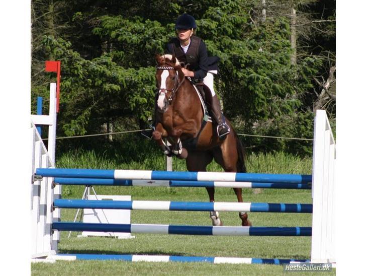 Welsh Pony (sec B) Creekmanns Cherie - LA i vrendsted.<3 søde tubbe, som var SÅ tæt på at vinde klassen.<3