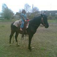 Anden særlig race Lady's Only Matador