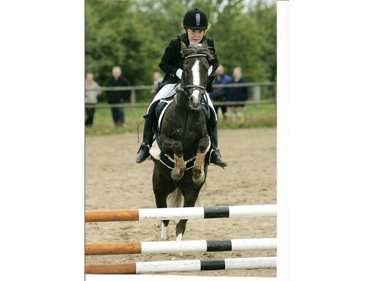 Welsh Pony (sec B) Silver - Til springstævne - Lidt af et ansigtsudtryk :)