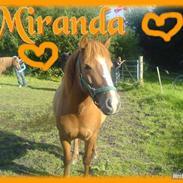 Anden særlig race Miranda *SOLGT :'(*