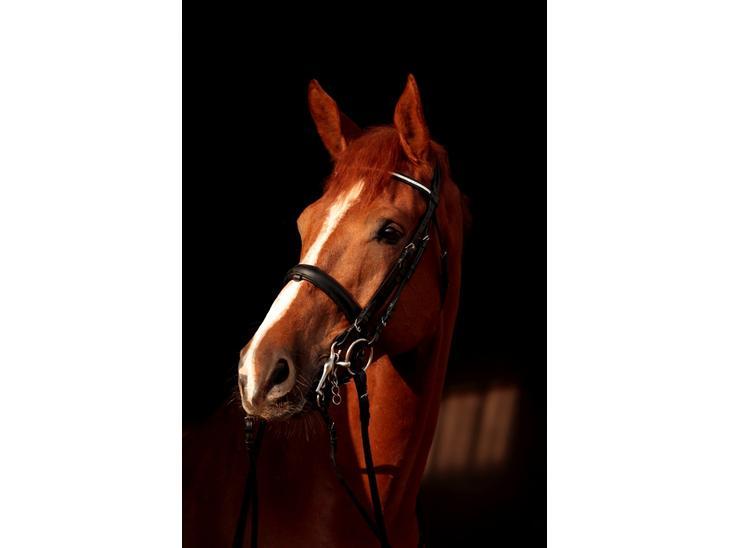 Dansk Varmblod Landlysts Lyrique *Solgt* [Tidl. hest] - Nr. 1 smuksak. billedet er taget af Marlene Bank Andersen