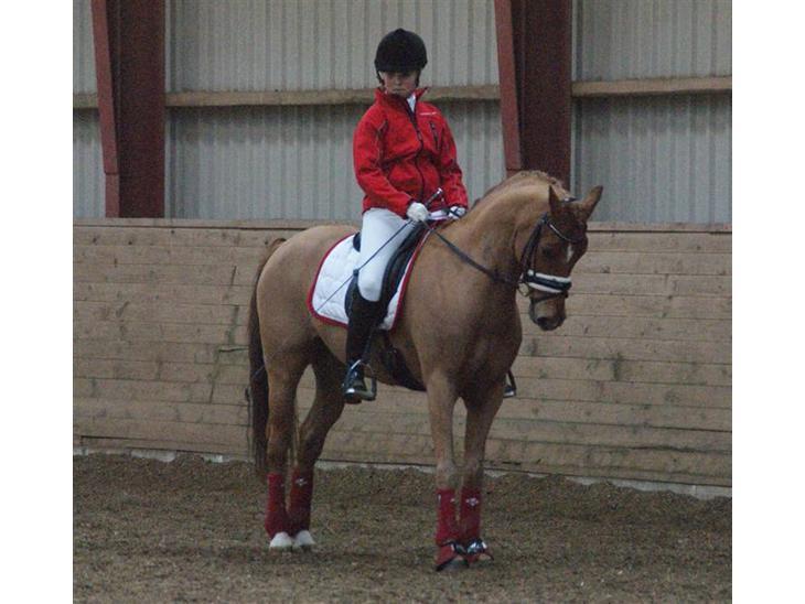 Tysk Sportspony ¤Mennecy - A-Pony<3  - Hej og velkommen til Mennecys profil , ;P Stævne i Vestbirk, min seje Pony!<3