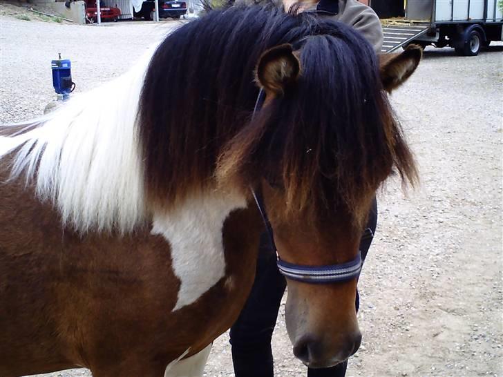 Anden særlig race furby - hej her er min nye pony er lige kommet billede 1
