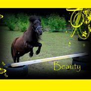 Shetlænder Beauty savner dig !! <3