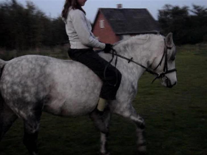 Anden særlig race |  Beauty - Næsten lige da jeg hade fået min skønne pony!<3 billede 6