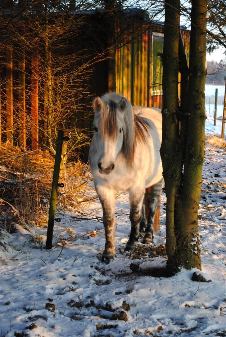 Anden særlig race |  Beauty - Min utrolig dejlige pony.*;´  billede 8