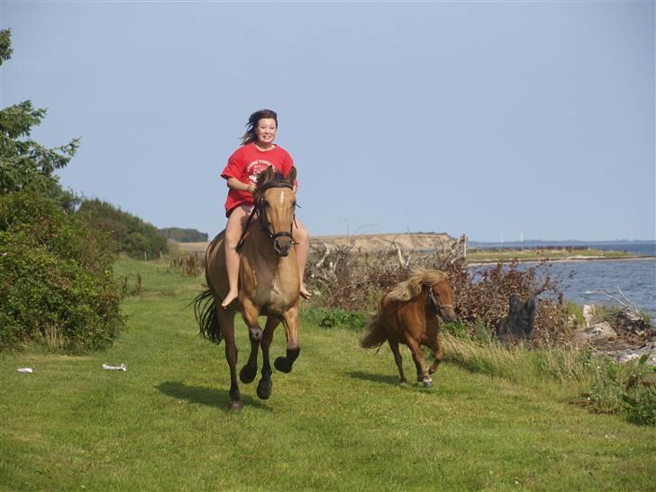 Anden særlig race Fjordsteds Tupsi - solgt d. 21/5 2014 - © Birgitte Tandrup billede 9