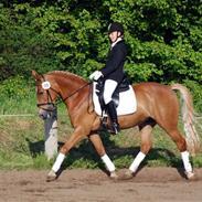 Anden særlig race Stella Af Toftlundgaard<3