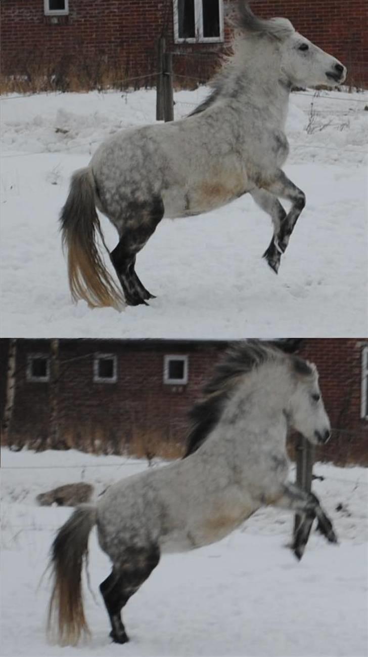 Anden særlig race |  Beauty - Min smukke pony der stejler :´) Hvor er hun smuk :´)  Foto mig :D billede 12