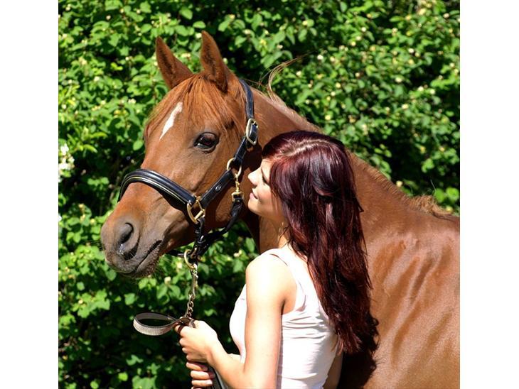 Welsh Pony (sec B) Kitty - Velkommen til min smukke stjernes profil :-)