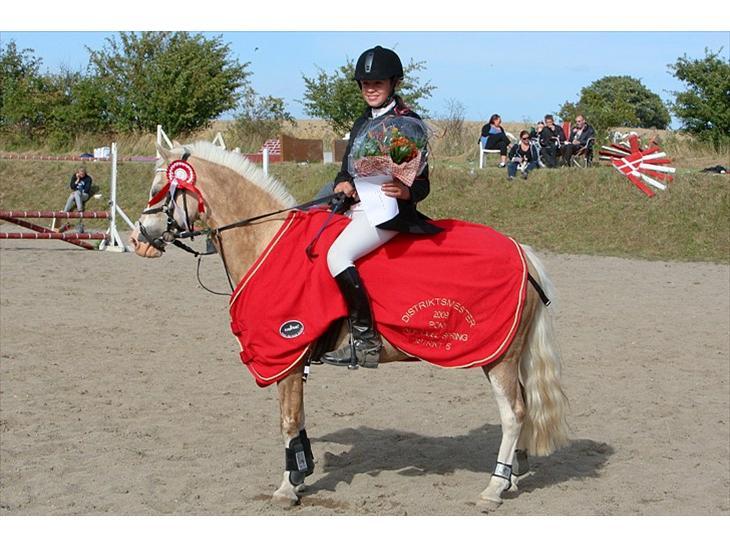 Welsh Pony af Cob-type (sec C) Åvangs Pepita - DISTRIKSMESTER 09 GIK I LB FOR 3´ER FØRSTE PLADS OG FØRSTE I LB NOMAL KLASSE<3