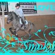 Amerikansk Pony springer SMOKY