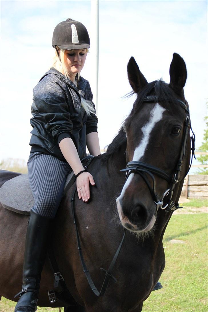 idiomer og ordsprog hest pik