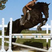 Oldenborg † Cavalcanti (Pony)