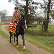 Anden særlig race Lykkes Sir Lancelot