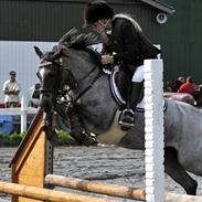 Welsh Pony (sec B) | Gazelle